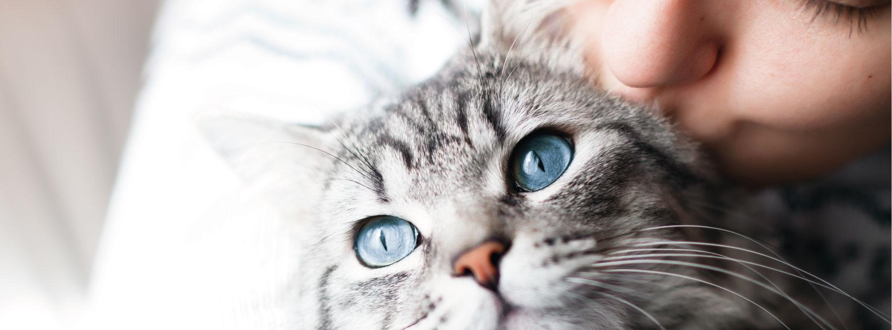 zvieratá a Incapet Collagen?