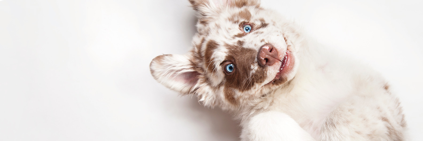 Dávkování advantix pes